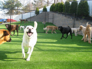 SOFTLAWN® PET TURF